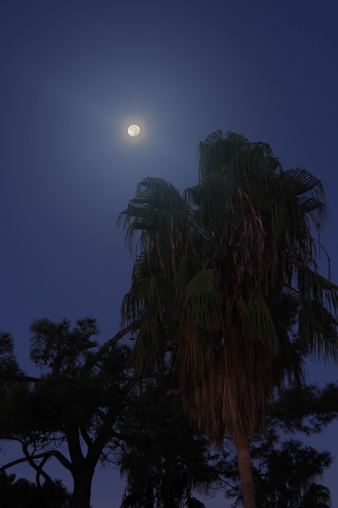 The Moon and Palm Tree